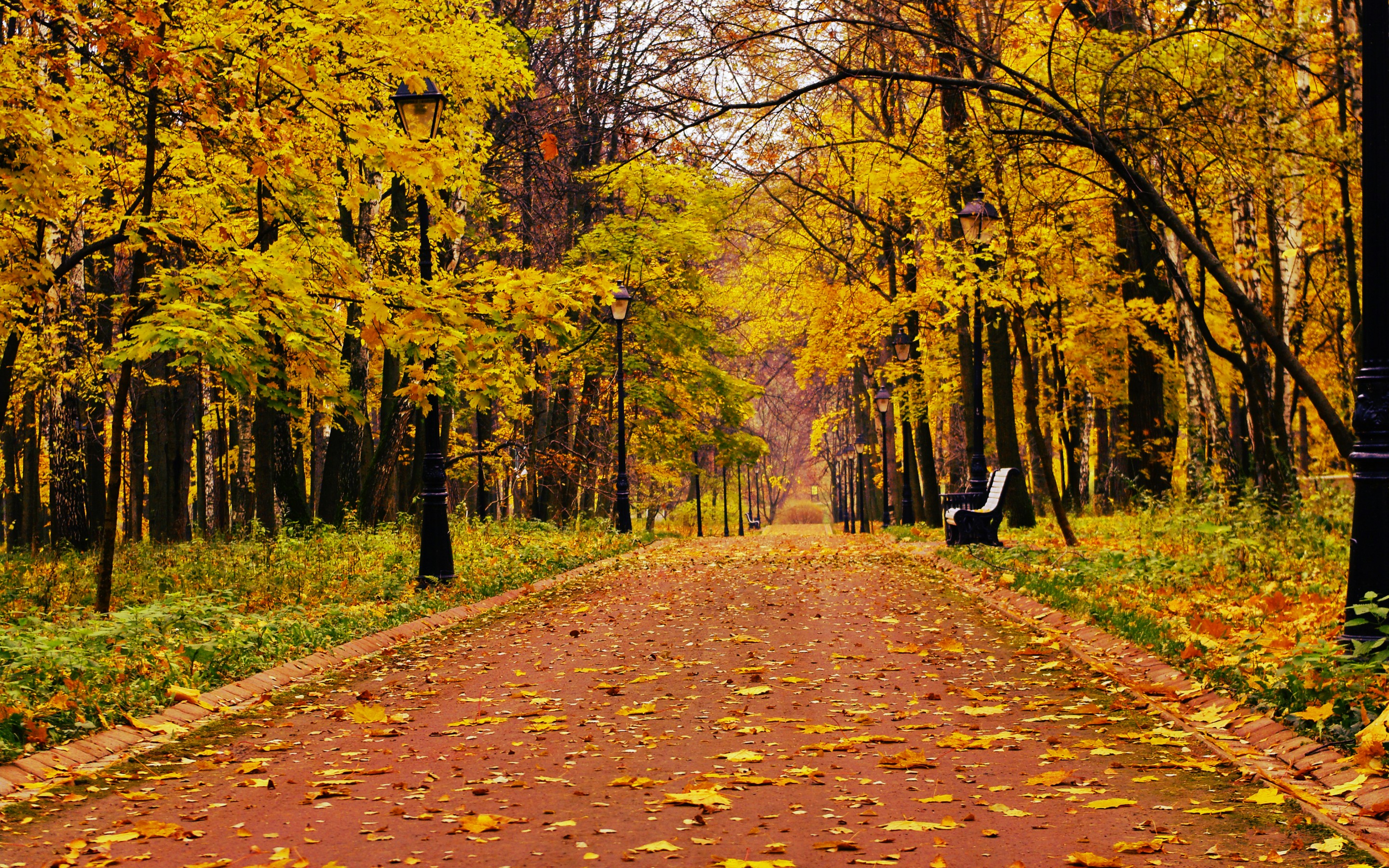 Computer Desktop Hd Wallpapers Fall Nyc Park Forest Alone Bench Bench 2880 X 1800