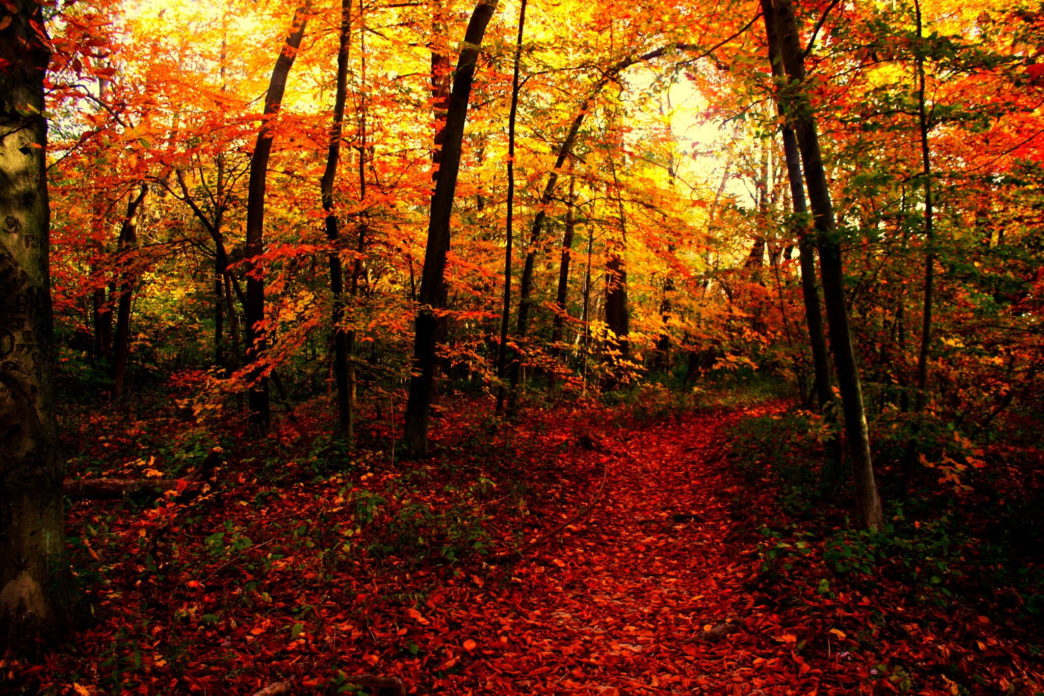 Fall Leaves Wallpaper Macbook Seasons Autumn Forests Trail Nature 2048 X 1366