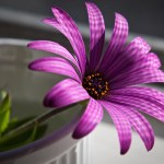 Purple Flower Wallpapers Hd