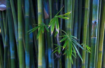bamboo wallpapers hd