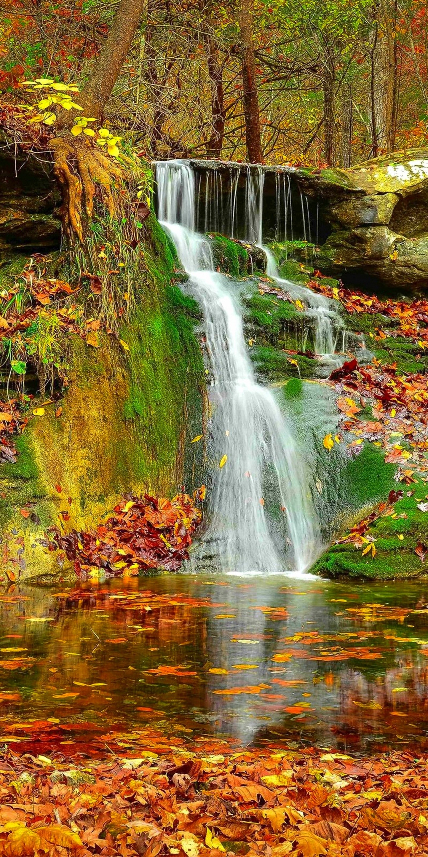 Wallpaper 3d Windows 7 1366x768 Waterfall Autumn Lovely Stream 1440x2880