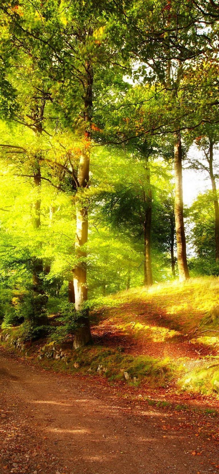 Wallpaper For Phones Fall Autumn Path In Forest Wallpaper 1080x2340
