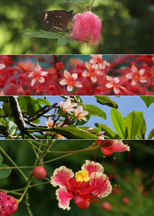 blog voyage whv australie darwin backpacker expat flower fleur botanic