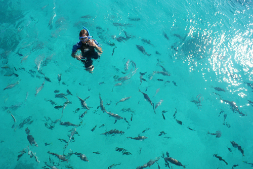 Nager dans la Grande Barrière de Corail