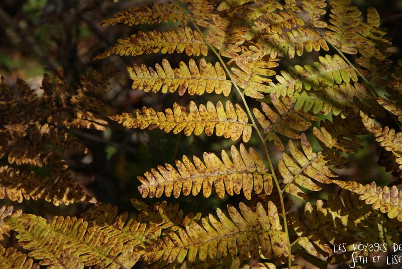 blog pvt canada pvtiste quebec mont orford parc photgraphie voyage couple ete indien summer indian couleur colors nature tour du monde fougere