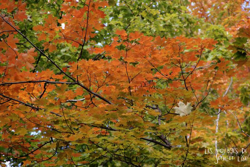 blog pvt canada pvtiste quebec mont orford parc photgraphie voyage couple ete indien summer indian couleur colors nature tour du monde feuille naturel