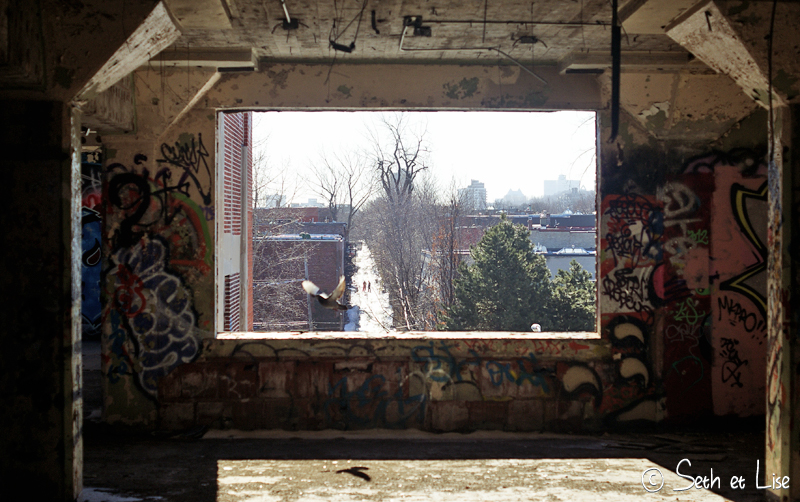 blog pvt canada montreal urbex streetart graffiti canada urban pigeon