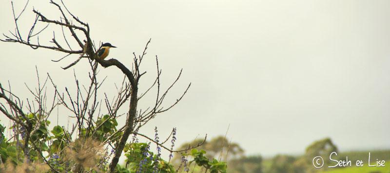 blog voyage pvt whv seth lise nz nouvelle zelande north roadtrip mangonui