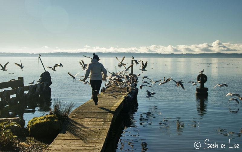 chasing_gulls.jpg