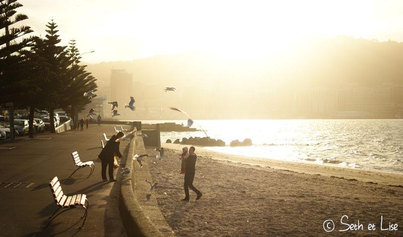 Petite promenade dans Wellington