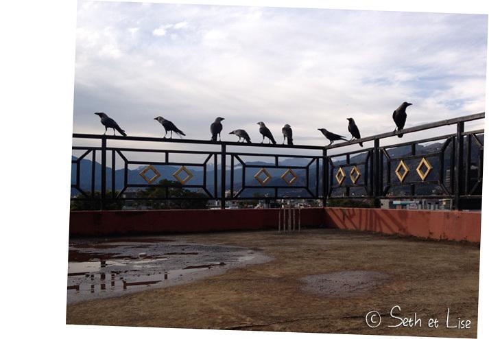 Le gang de corbeaux qui attend qu'on ait terminé notre pique-nique sur le toit.
