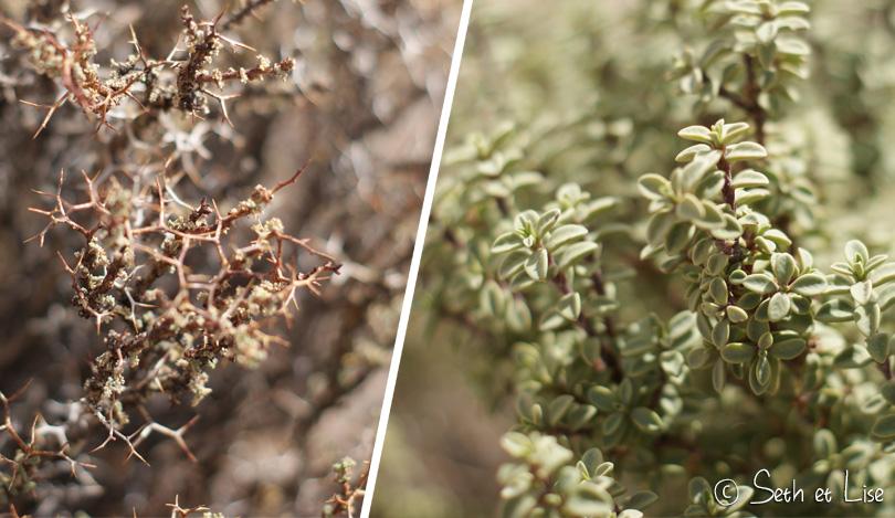 Plantes utilisées pour soigner les courbatures