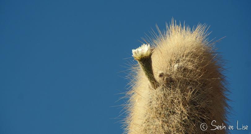 salar uyuni bolivia cactus