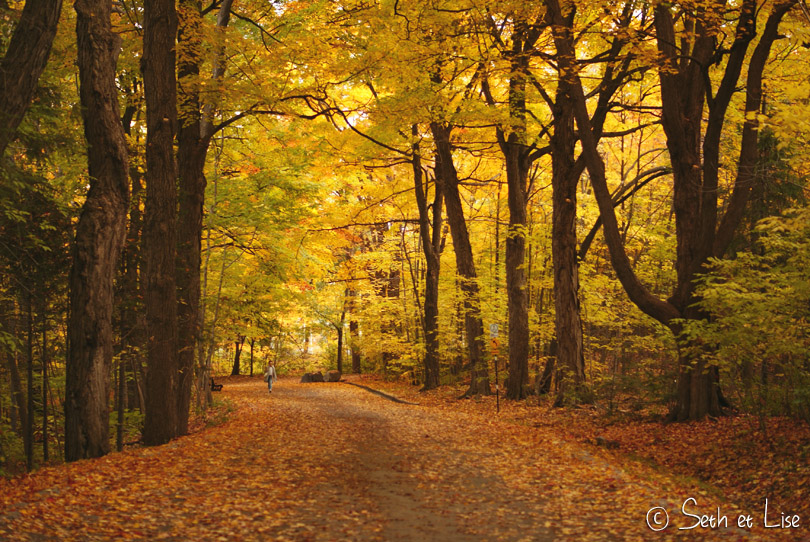 chemin olmsted mont royal automne
