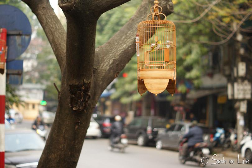 oiseaux ornement vietnam