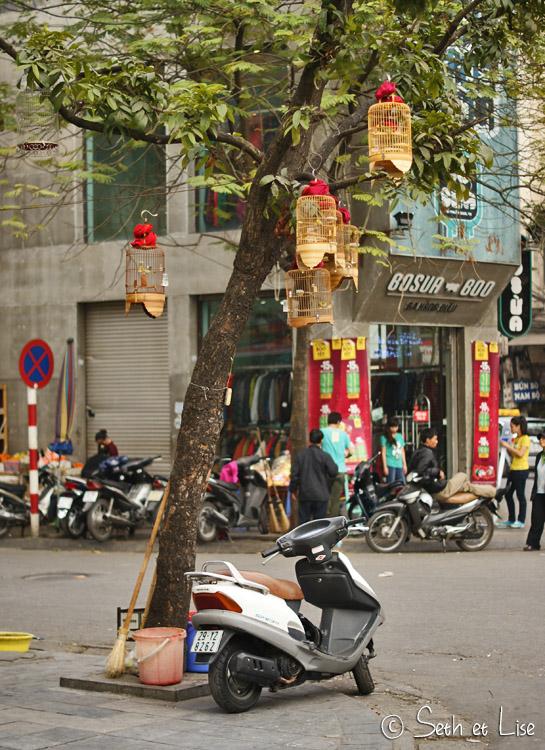 oiseaux cage arbre vietnam