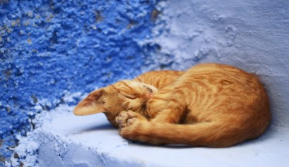 chat chefchaouen