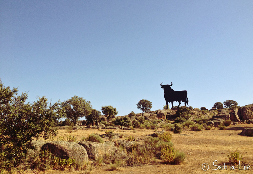 taureau espagnol