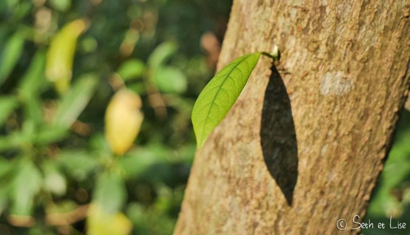 taipei vegetation feuille