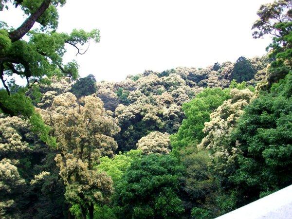 Climbing Konpira-san - First Stop - 08