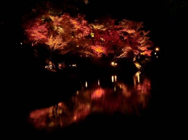 Ritsurin autumn nocturne