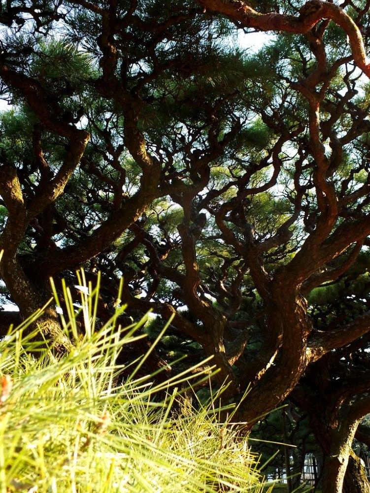 Ritsurin Garden - Late November - 06