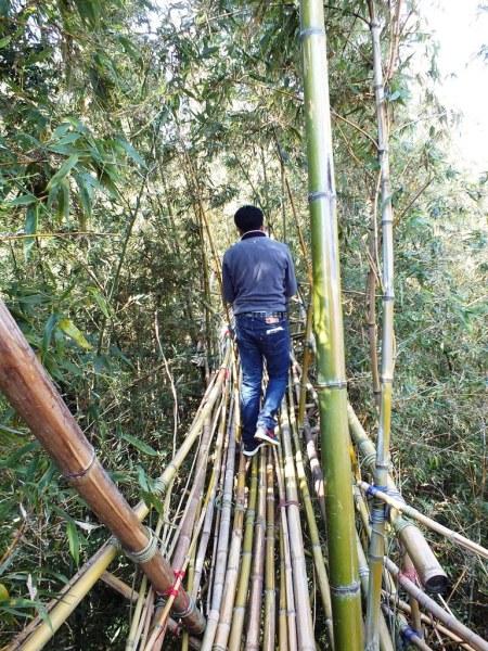 Big Bambu - Teshima - 10