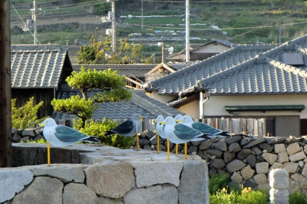 Seagull Parking Lot