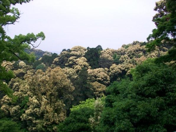 Konpirasan - Main Shrine - 12