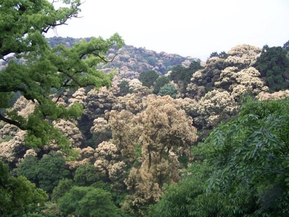 Konpirasan - Main Shrine - 13