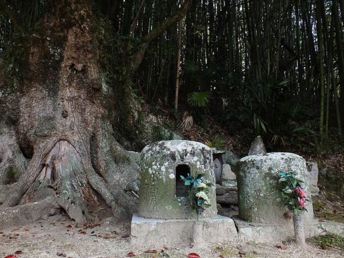 20 - Camphor Tree on Teshima