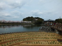Cherry Blossoms at Kikaku Park 2017 - 2