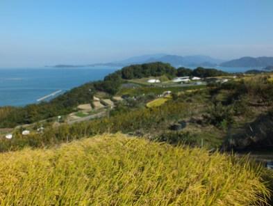 Harvest Festival and Seppuku Pistols on Teshima - 14