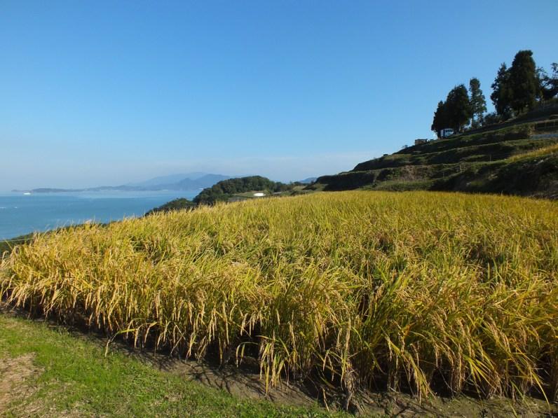 Harvest Festival and Seppuku Pistols on Teshima - 9