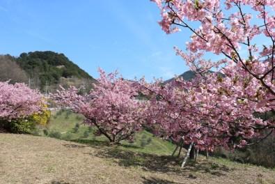 Shodoshima - 2019-03-05 - 32