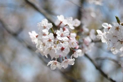 Ogijima - April 9-23 2019 - 11