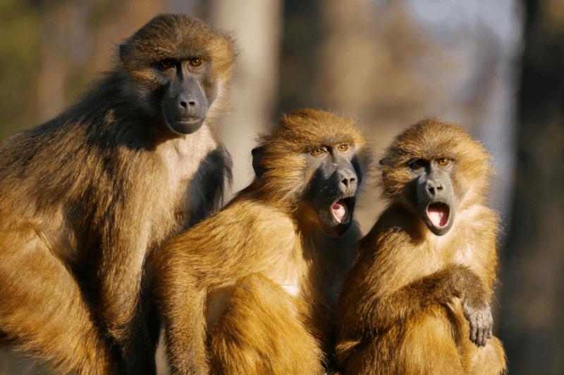 Empatía y monos