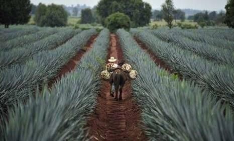 El Tequila se ve sólido frente al TLCAN