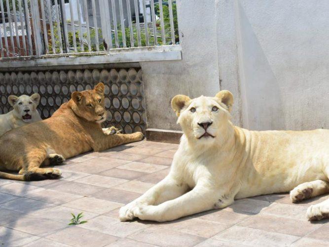 leones_iztacalco-5