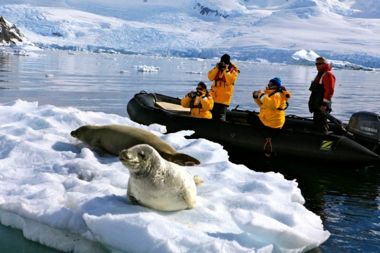 Passengers getting up close and personal with the seals of Antarctica