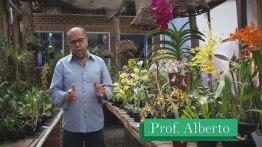 Como Cuidar de Orquideas? 【Com o Professor Alberto】