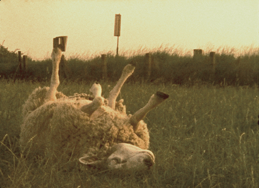 Jeroen Eisinga Arm-Schaap-(Poor-Sheep)