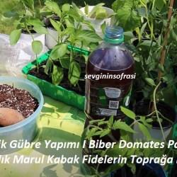 Organik Gübre Yapımı I Biber Domates Patlıcan Salatalık Marul Kabak Fidelerin Toprağa Dikimi