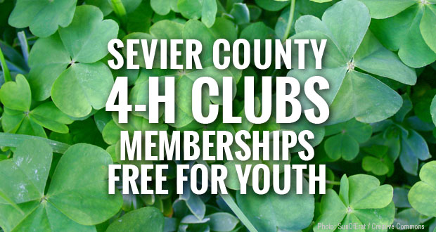 Sevier County 4-H Clubs teach leadership and life skills with hands-on programs.