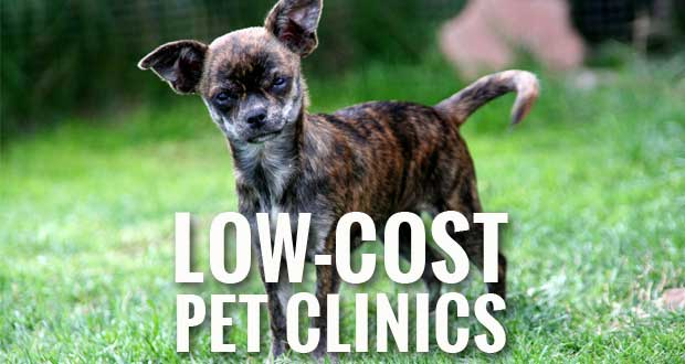 Low Cost Pet Vaccination & Microchip Clinics in Sevierville