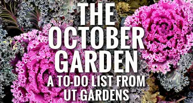 October gardening tips from the UT Gardens