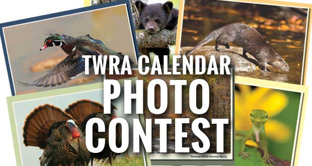 TWRA Holding Photo Contest for Tennessee Wildlife Calendar