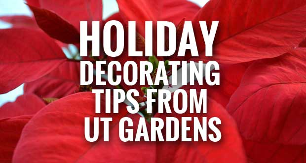 Holiday Decorating Tips from UT Gardens: Use Natural Greenery To Deck the Halls