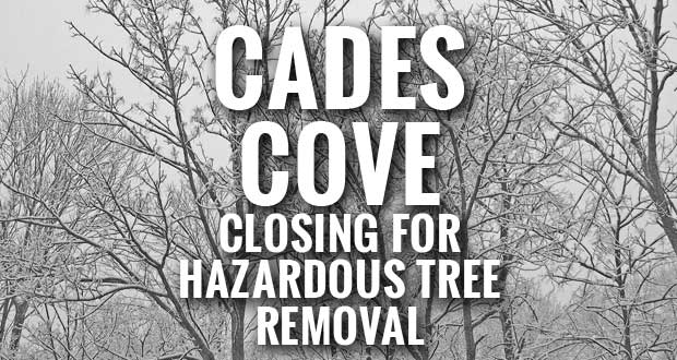 Great Smoky Mountains National Park Cades Cove Closing for Hazardous Tree Removal
