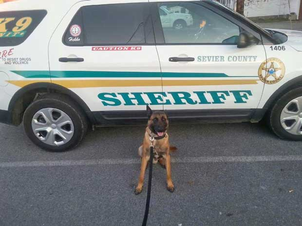 sevier-county-sheriff-k9-3